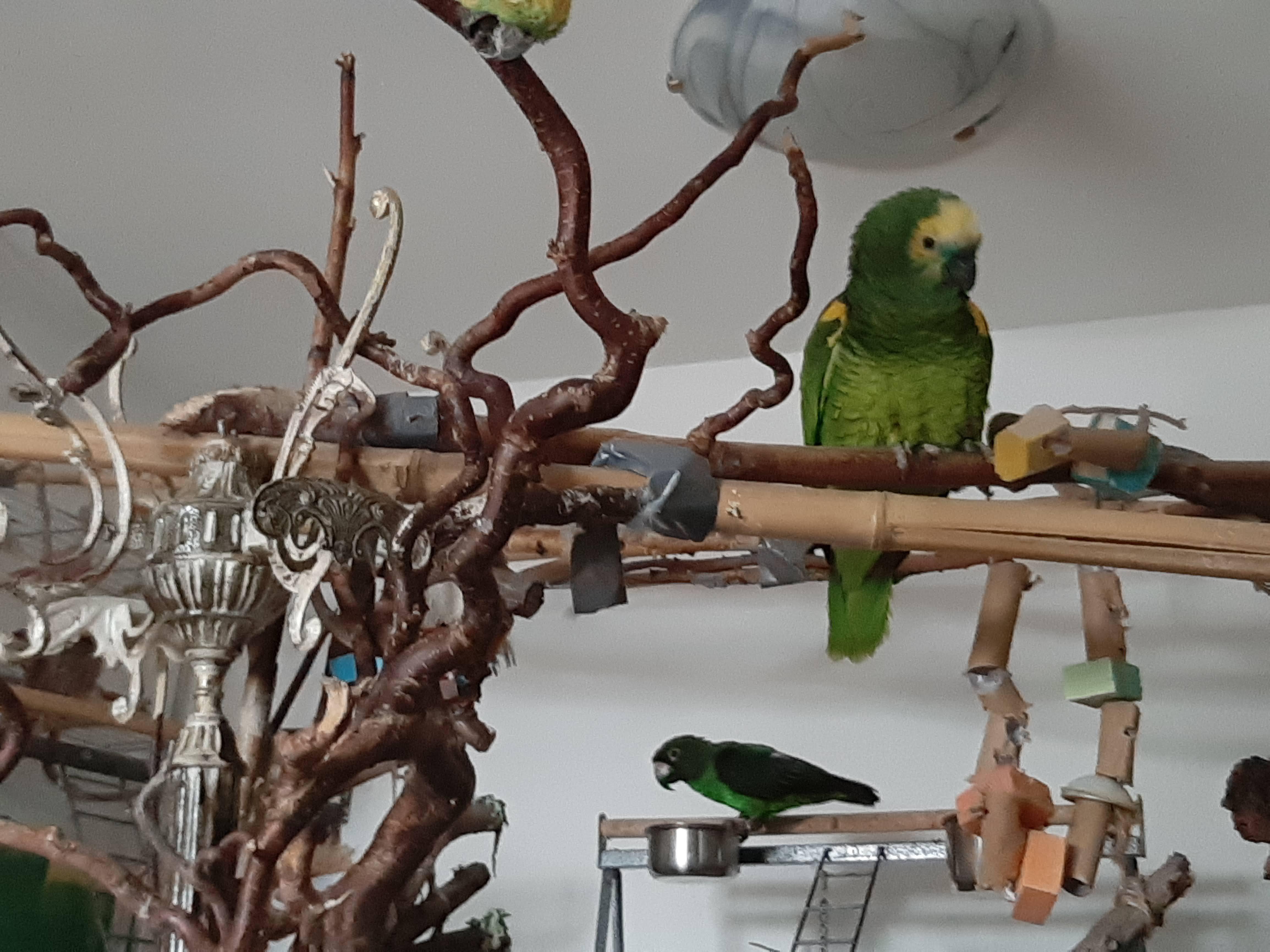 Vogelzimmer  renoviert